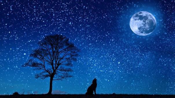 月に向かって寂しく吠える狼の写真