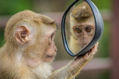サルが鏡を見ているところ