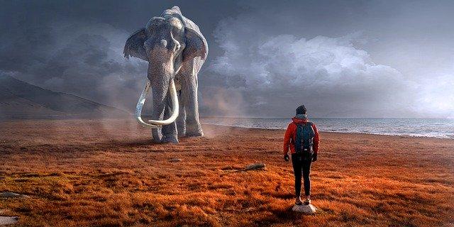 砂漠で、大きな象の前に男性が立っているところ