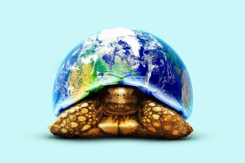 甲羅が地球になっている亀