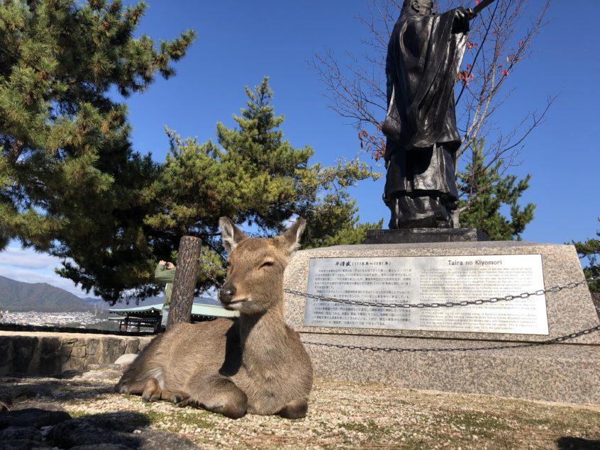 厳島に居た鹿